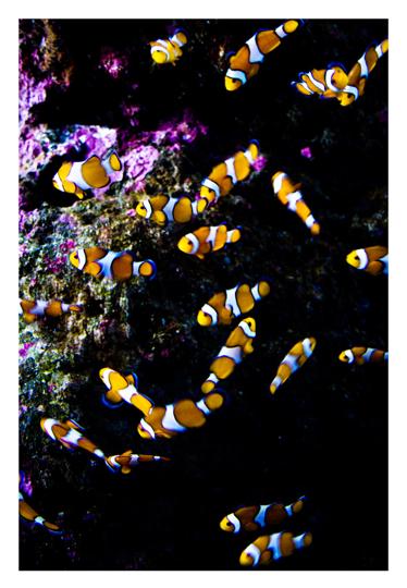 aquarium_postal_amaia_esteban_06