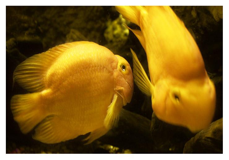 aquarium_postal_cristina_carrasco_03