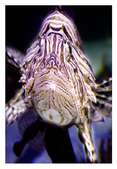aquarium_postal_cristina_carrasco_06