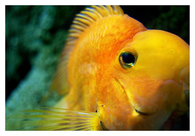aquarium_postal_iban_bujan_02
