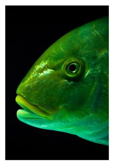 aquarium_postal_iraia_membrive_02