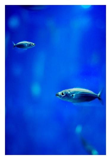 aquarium_postal_julen_cano_02