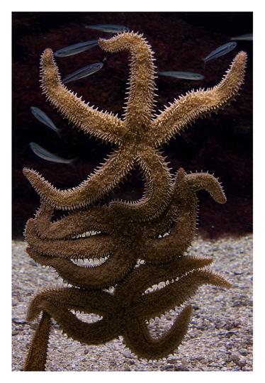 aquarium_postal_nerea_delteso01