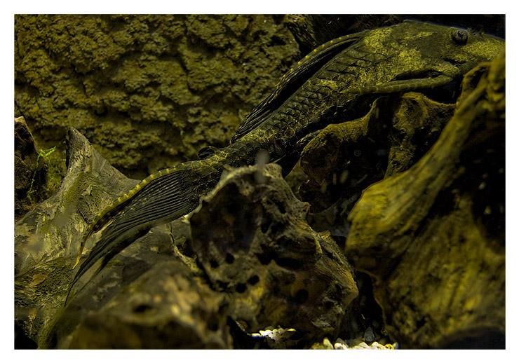 aquarium_postal_nerea_delteso02