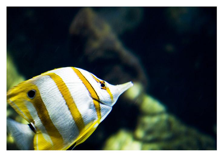 aquarium_postal_sara_comero_01